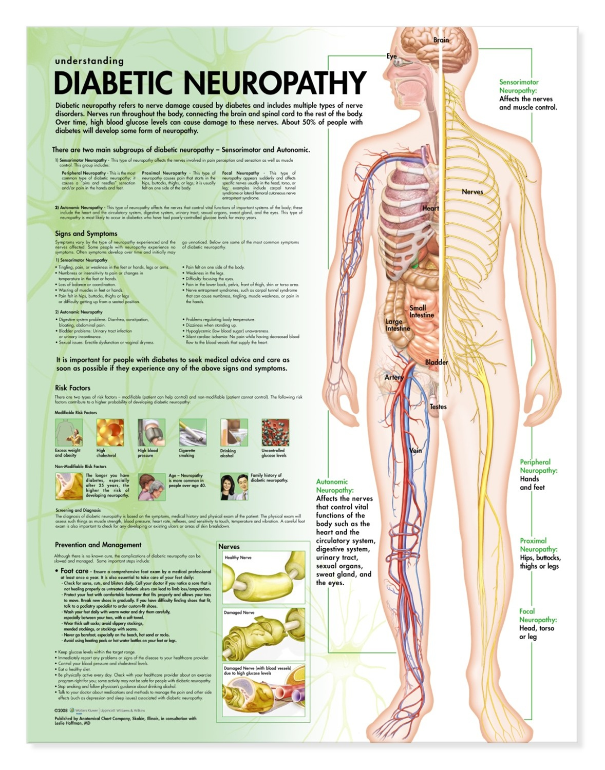 Diabetic Body Chart Orgnat Life Products Gland Muscle And Part Is Affected Full Diagram
