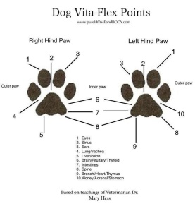dog-pressure-points-paws