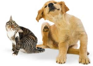 ear-mites-dog-and-cat