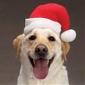 christmas-dog-hat