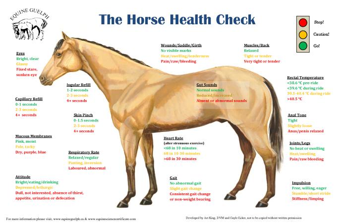 horse-chart
