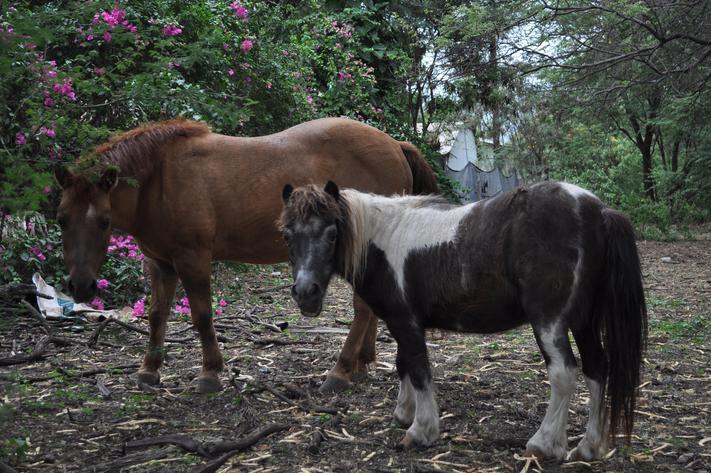 2 ponys heaven sent sanctuary