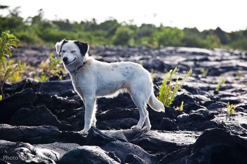 big island dog rescue